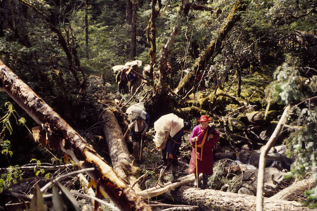 31a 1995 Jolly Lama Crossing Logs